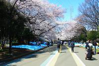 2012.4.7お花見1.jpg